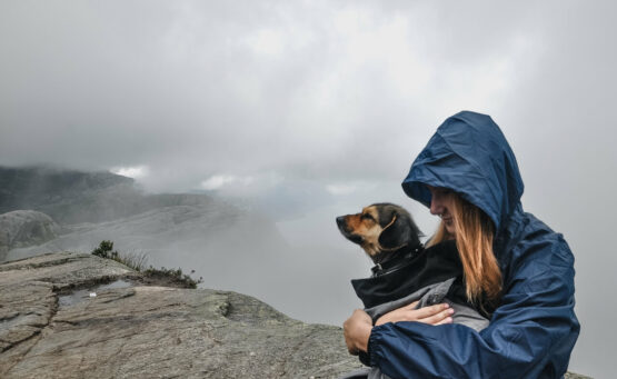 podróż do Norwegii z psem