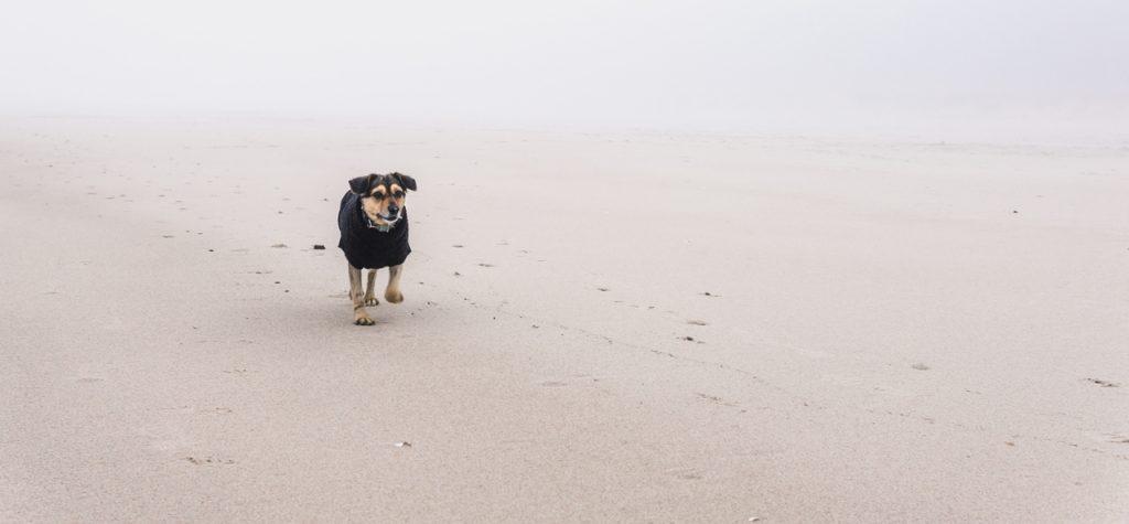 podróże z psem