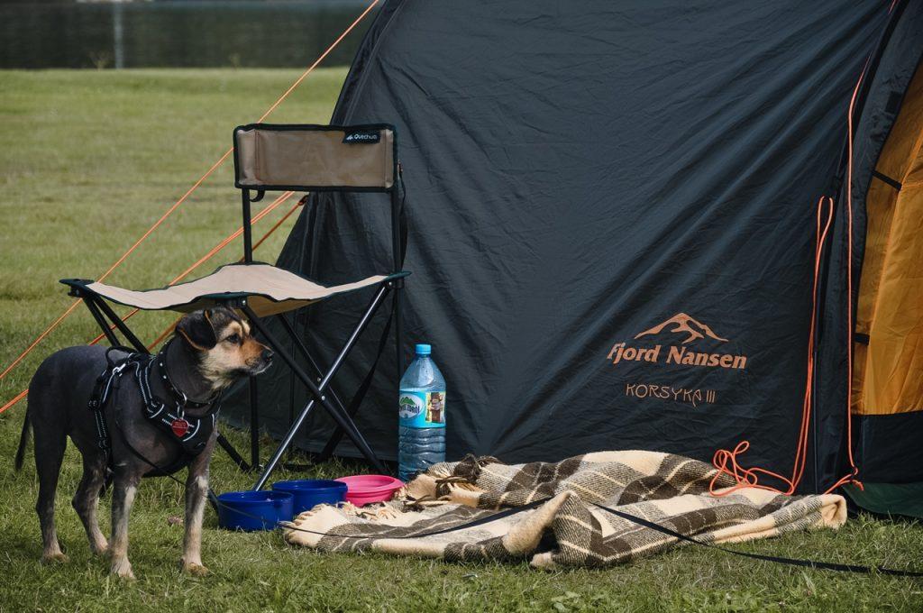 pod namiot z psem