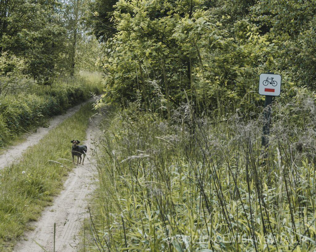 Z psem na Mazury Kretowiny