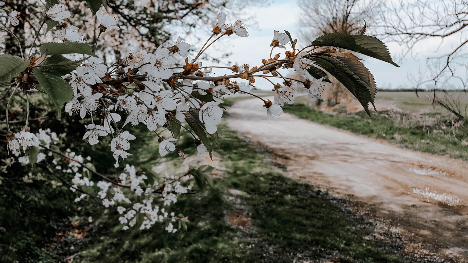 tapety na pulpit wiosna na wsi
