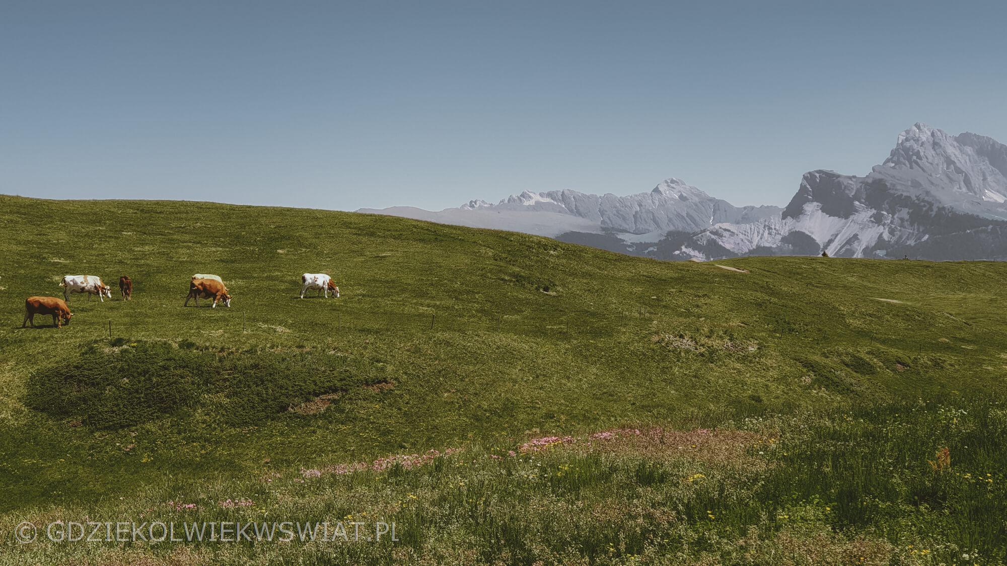 Dolomity Alpe di Siusi latem szlaki
