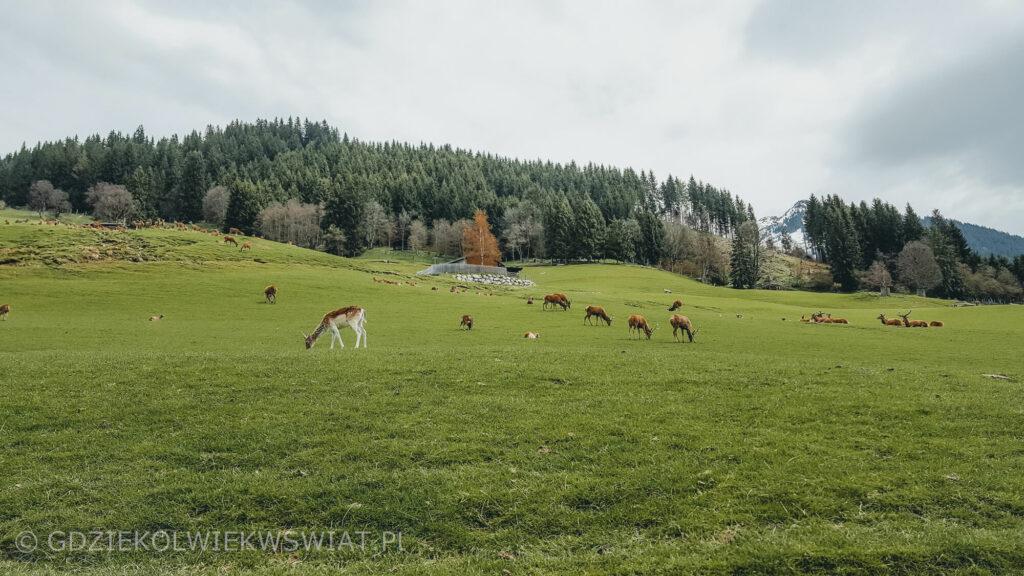 Alpy Kitzbuhelskie Austria ciekawe miejsca