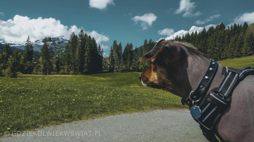 Austria z psem gdzie jechać