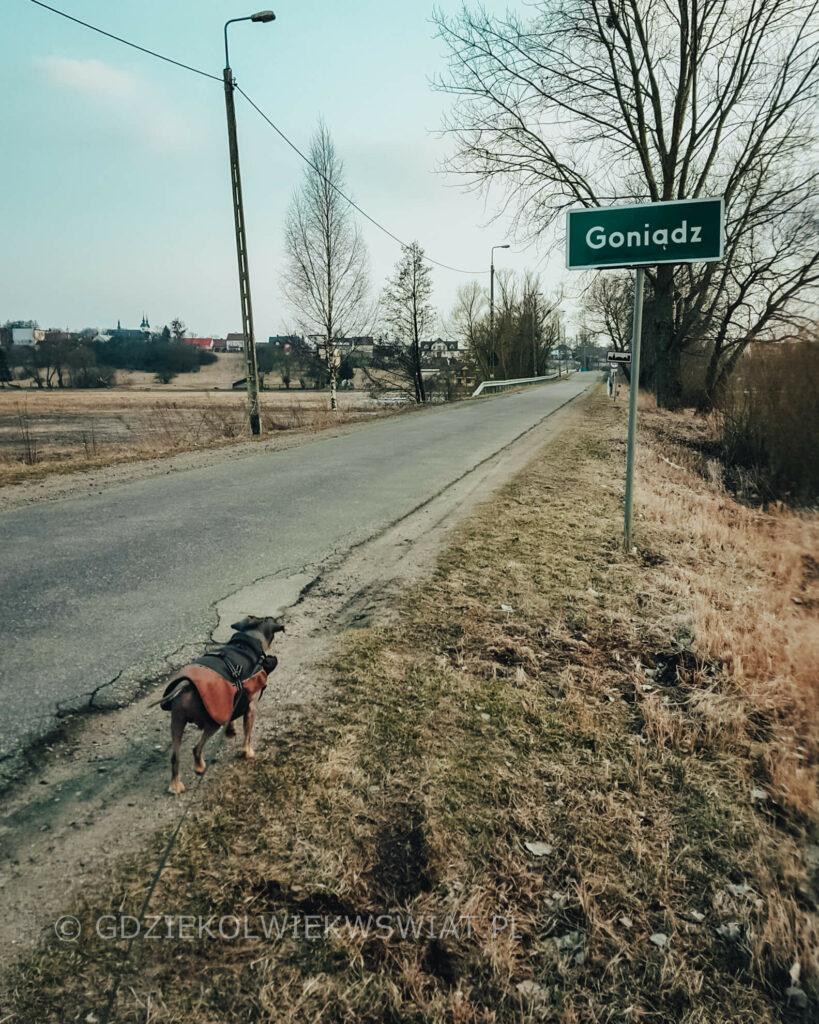 Biebrza z psem