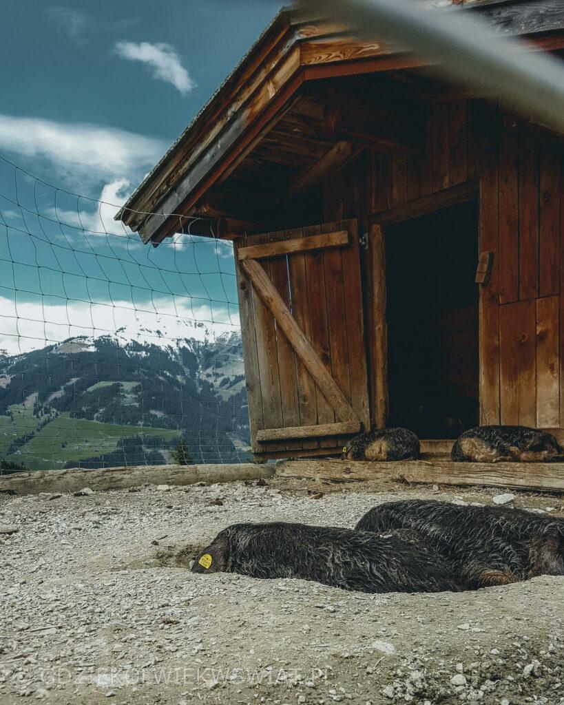sługi weekend w Austrii Alpy Kitzbuhelskie