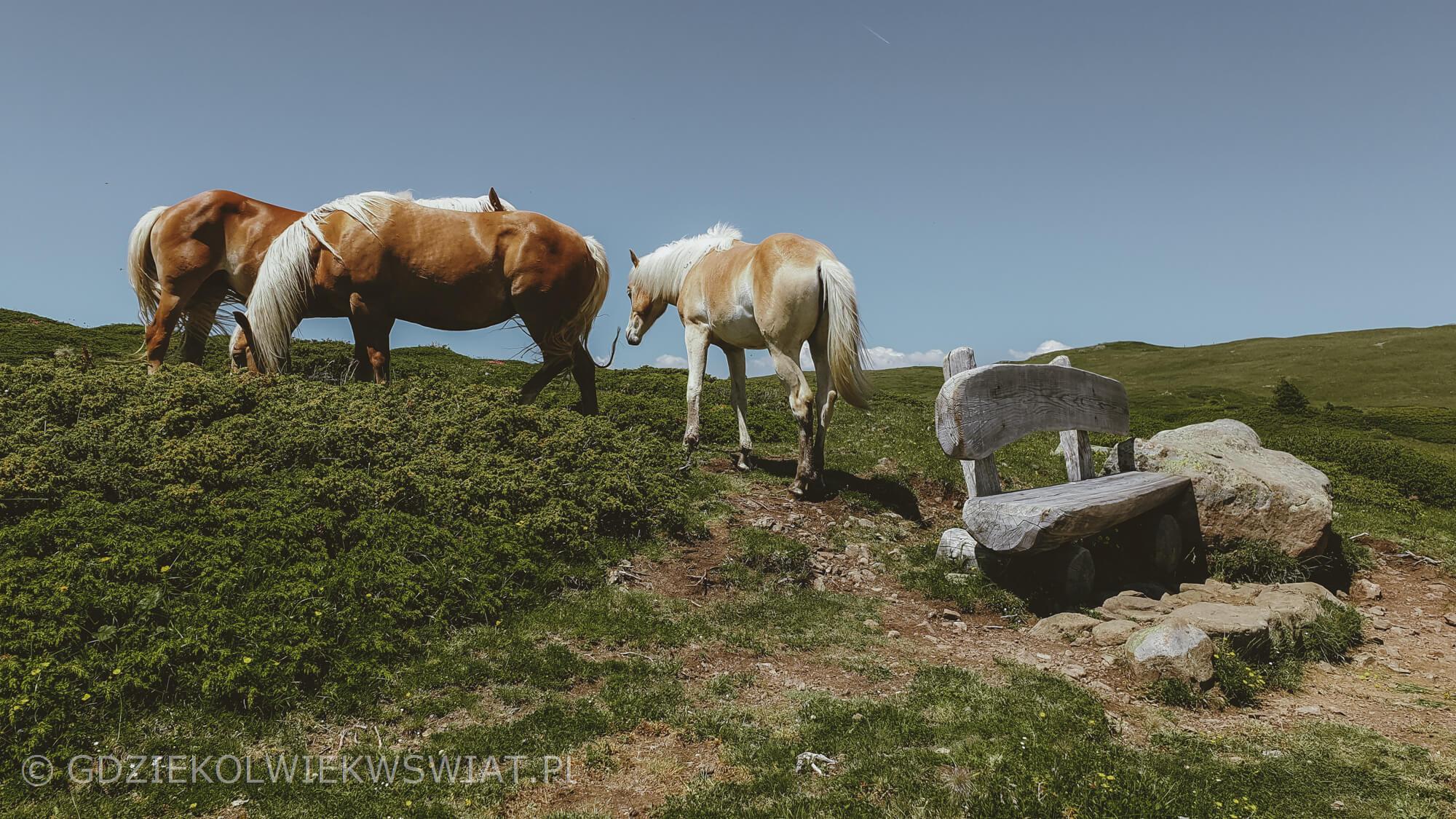 Dolomity trekking przez Alpe di Siusi (Seiser Alp)