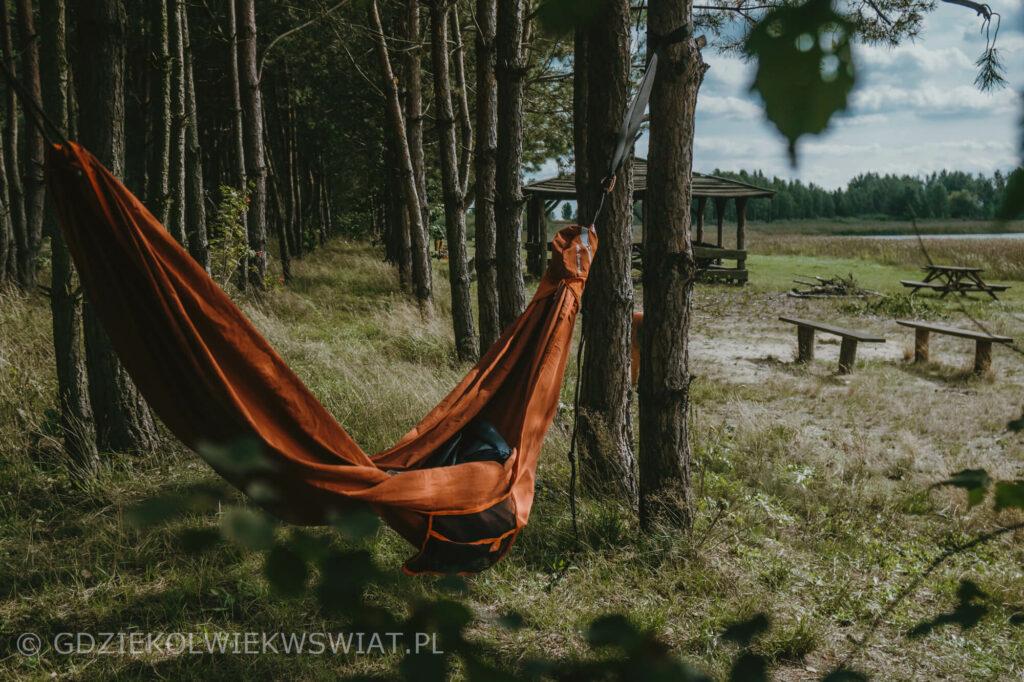 Lasy Parczewskie Bobrówka
