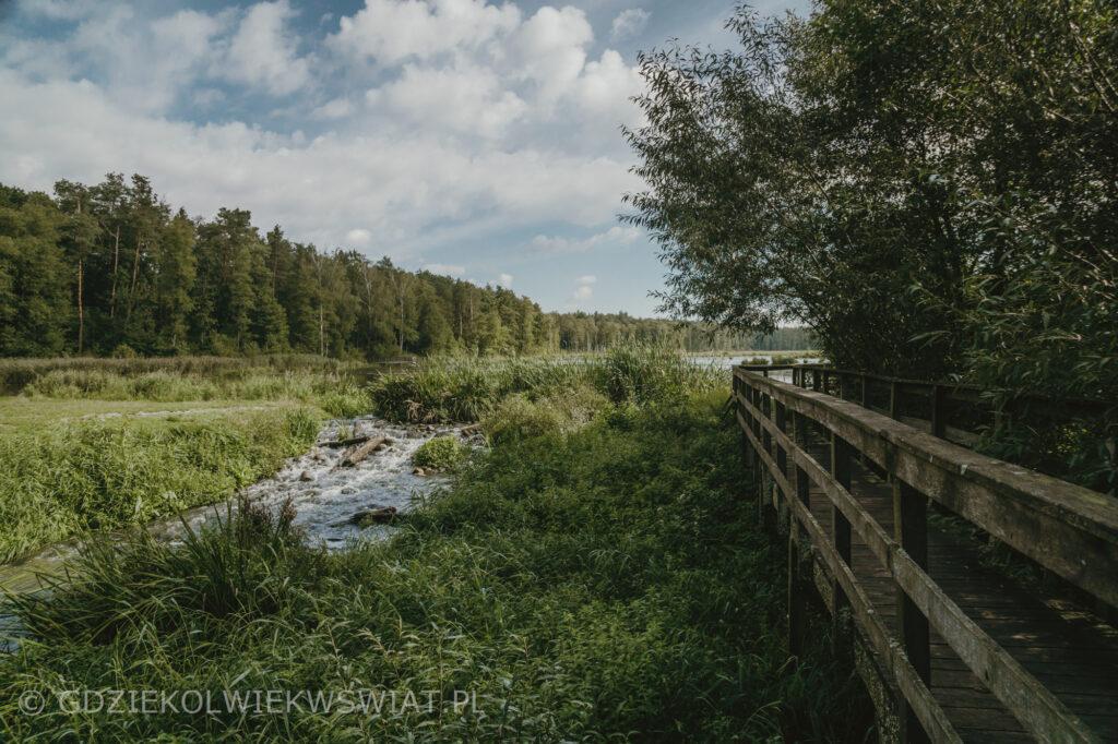Lasy Parczewskie szlaki