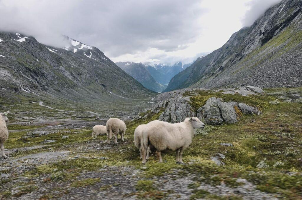 Norwegia widoki