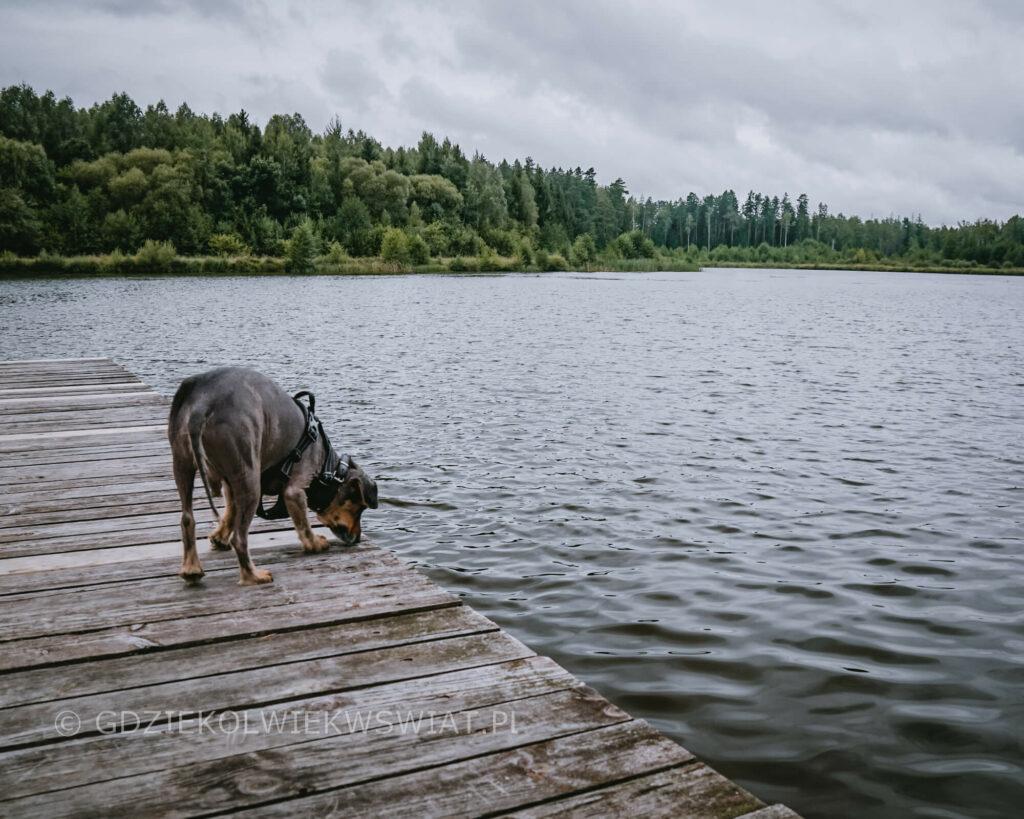 Puszcza Knyszyńska z psem