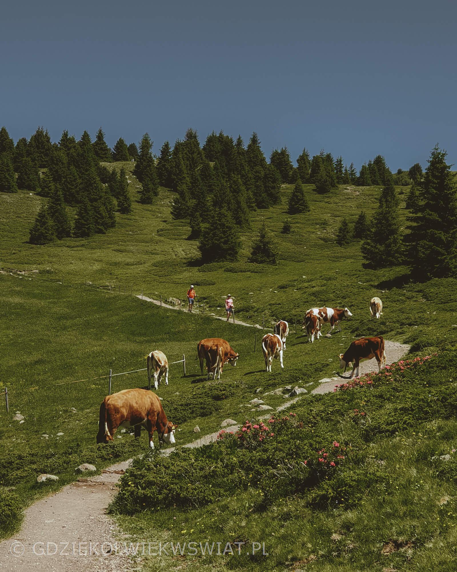 Seiser Alp w Dolomitach latem