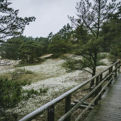 Wydma Orzechowska wydmy w Polsce