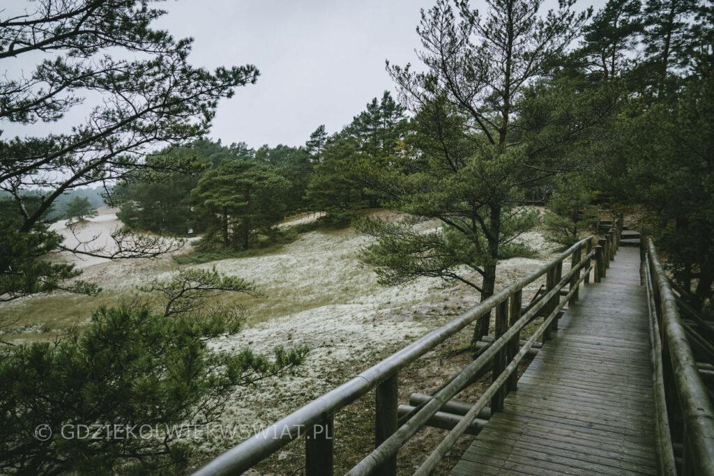 Wydma Orzechowska ścieżka dydaktyczna ruchome wydmy