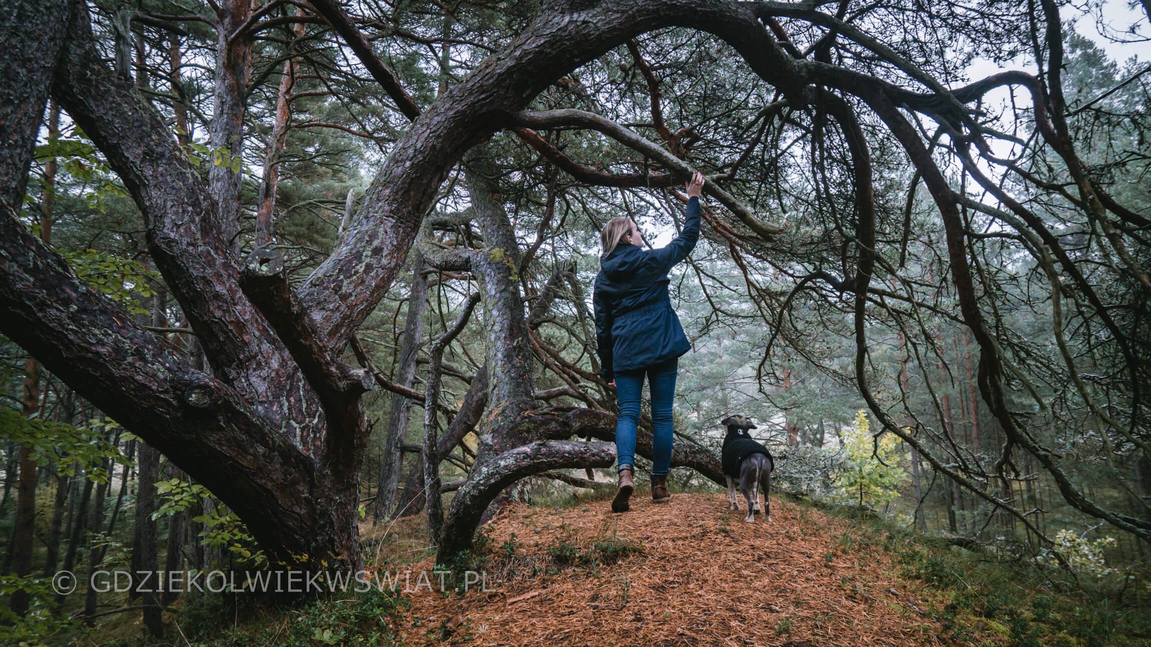 Wydma Orzechowska z psem