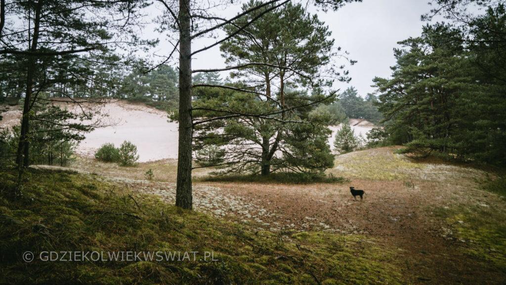 Wydma Orzechowska zdjęcia wydmy w Polsce