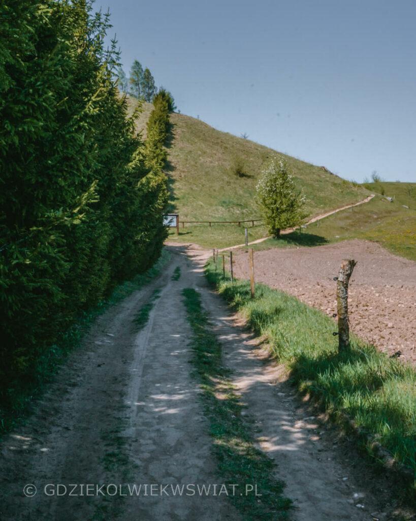 co warto zobaczyć na Suwalszczyźnie Góra Cisowa