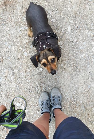 wyjazd z psem w Dolomity