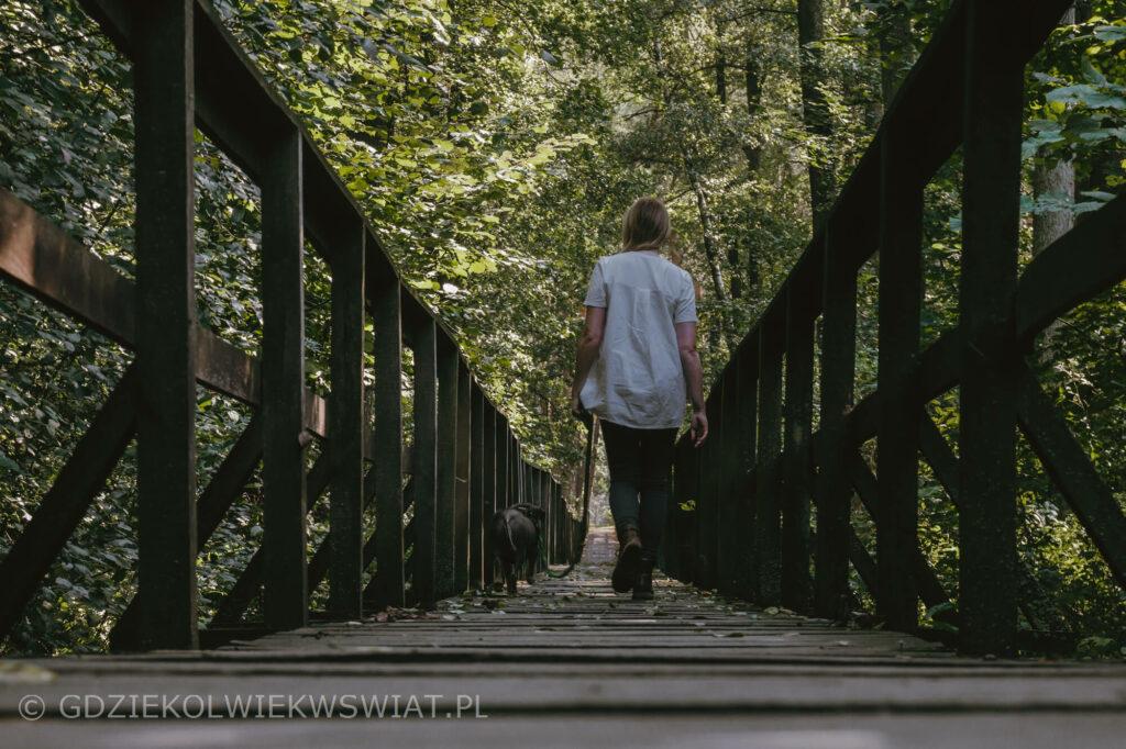 ścieżka Bobrówka Lasy Parczewskie