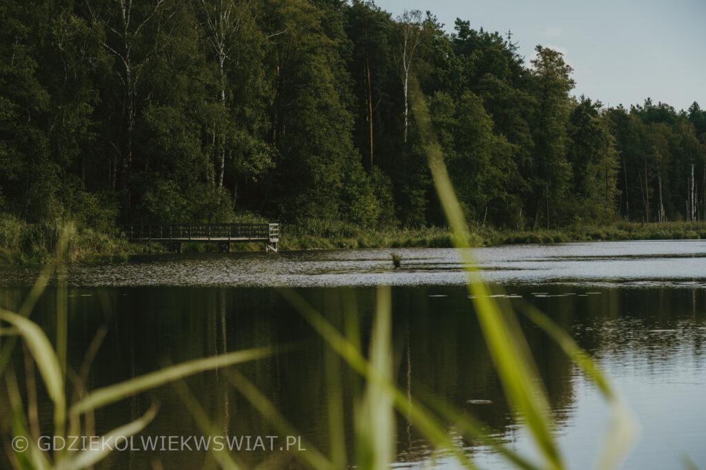 ścieżka Bobrówka w Lasach Parczewskich koło Lublina
