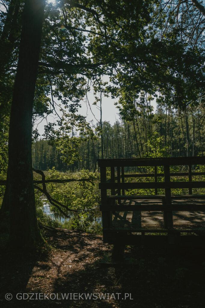szlak Bobrówka w lubelskim