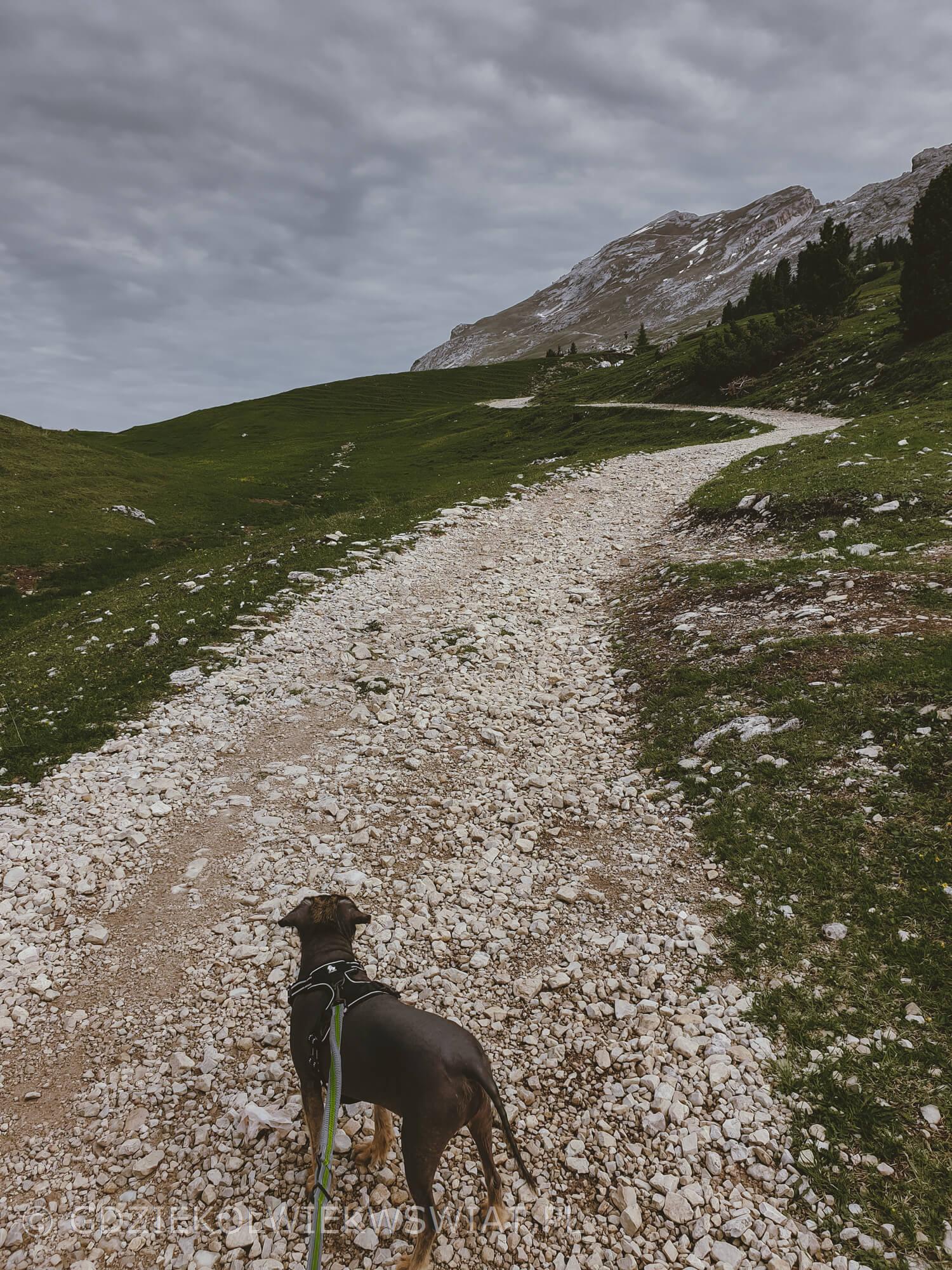 szlak przez Prato Piazza i Monte Specie