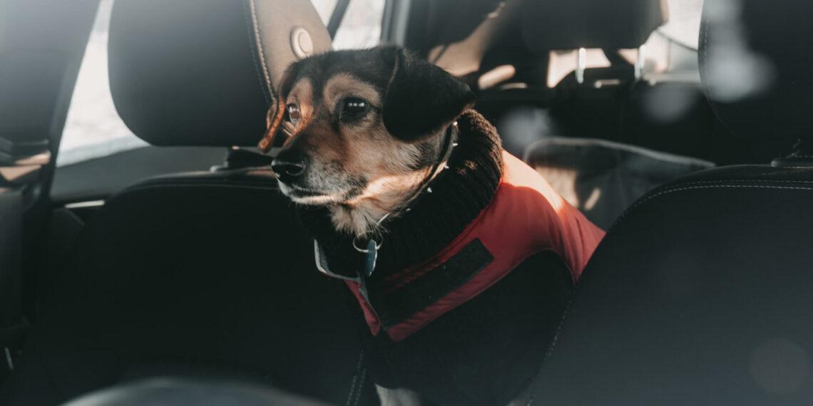 ubezpieczenie dla psa w podróży